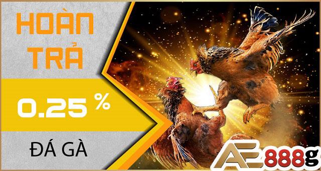 Hoàn trả 0.25% khi chơi đá gà tại AE888
