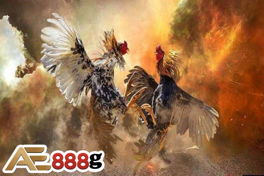 Đá gà AE888 online là gì